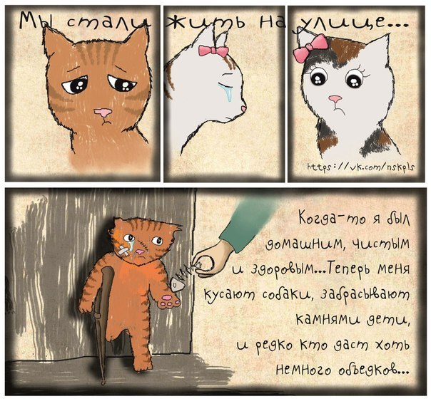 Стерилизуйте кошку_4