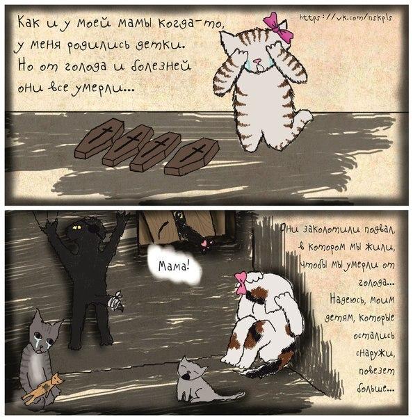 Стерилизуйте кошку_5