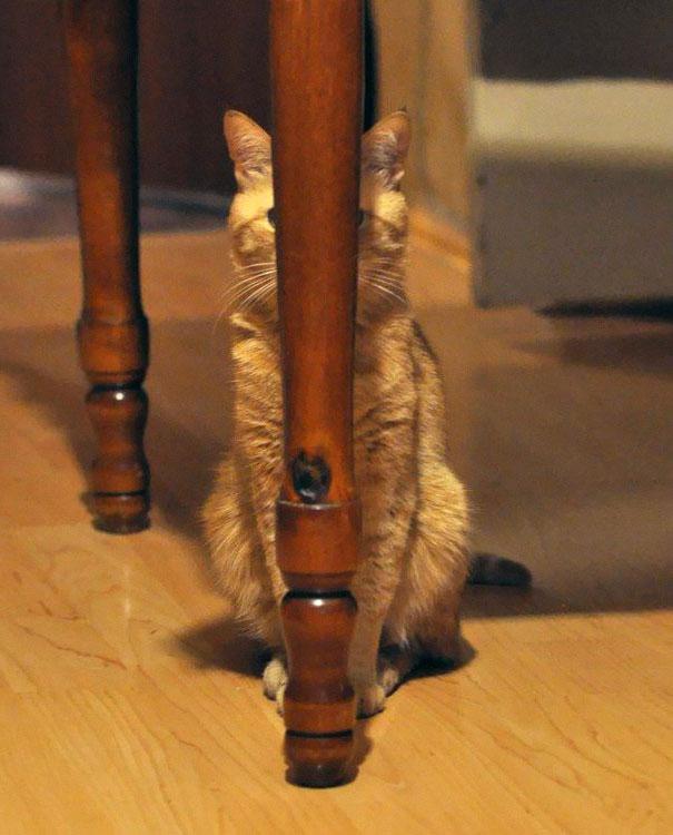 Этот кот весьма самонадеян, воображая себя тростиночкой.