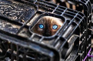 ninja-cat-hiding-funny-36__605
