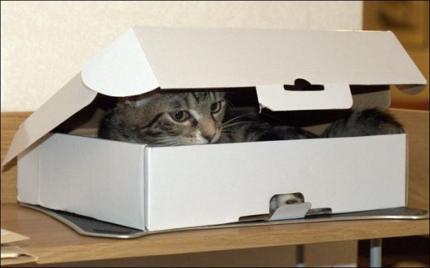 one-box-two-cats-01