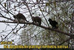 raspustilis-koty_1313837663