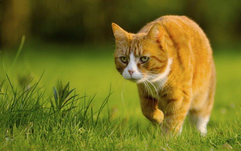 1353443977_cats_catsmob_com_20120227_00399_003 - копия