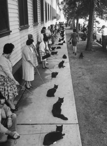 Owners with their black cats, waiting in