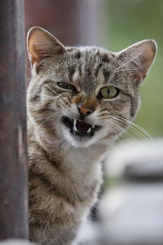 Сколько кот может терпеть