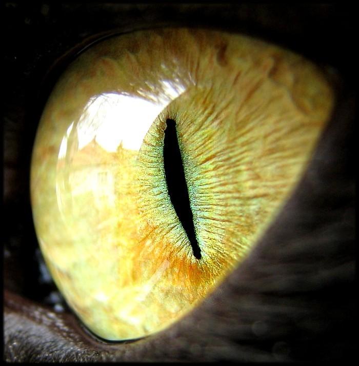Cats_eye - копия