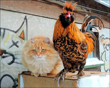 inside_cat_and_chicken