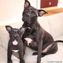 pet-copy-custom-plush-toys-cuddle-clones-11-605x605