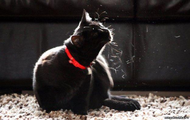 линька-кошки2