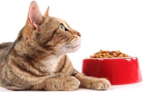 сухой-корм-для-кошек-обзор