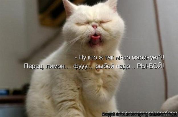 kotycatcatssmeshnye_kotykotenokprikol_963