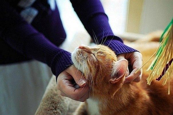 Фото девушка гладит кота