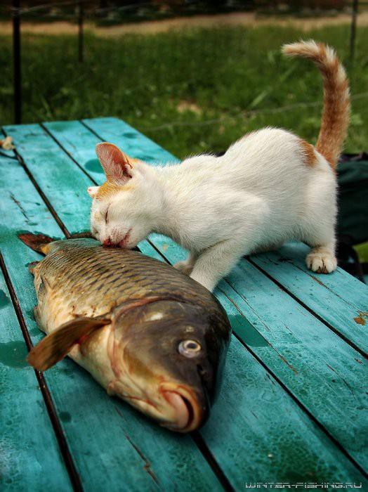 cat-bigfish-02