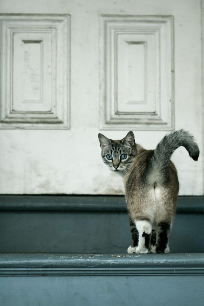 кошачья-попа
