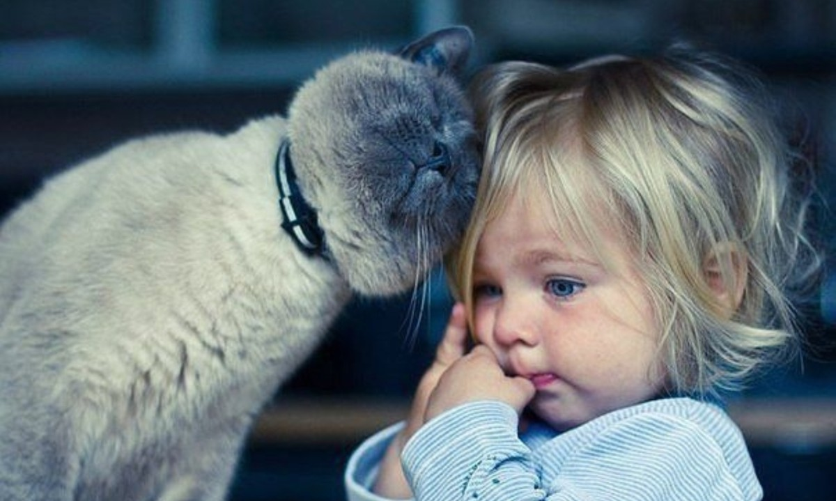 5 способов сделать кошку ласковой