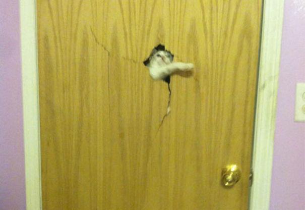 funny-animal-outside-door-let-me-in-10__605