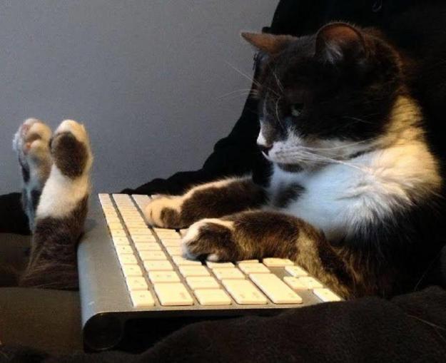 hello_my_on-line_friends_cats_laptop_hd-wallpaper-1590346