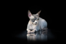 los-angeles-commercial-animal-photographer