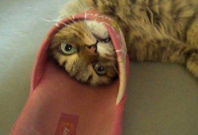 stuck-cat