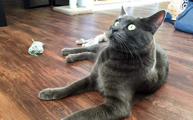Коты и мята видео