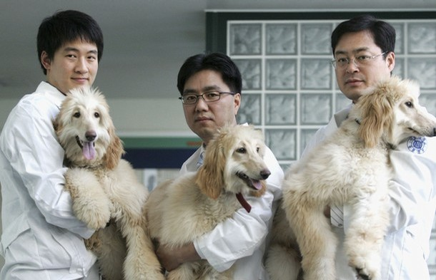 SEOUL, SOUTH KOREA - DECEMBER 18: Lee Byeong-Chun (C) a veterinary professor of Seoul National University, and his researchers show three female genetically identical Afghan Hound clones: Bona (L), Hope (C) and Peace (R) at the university's Veterinary School on December 18, 2006 in Seoul, South Korea. Lee, a former key collaborator of disgraced South Korean cloning scientist Hwang Woo-suk, claimed Monday that he succeeded in cloning a female dog, following last year's breakthrough of creating the world's first cloned dog, which was male.  (Photo by Chung Sung-Jun/Getty Images)   *** Local Caption *** Lee Byeong-Chun;Bona;Hope;Peace