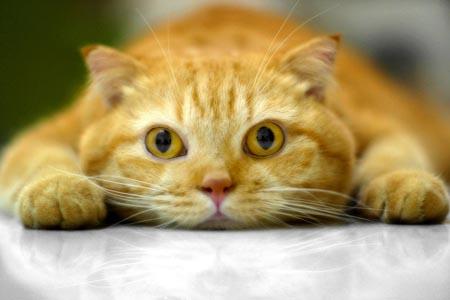 baobao-red-cat-babykailan