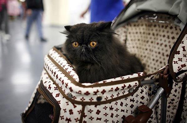 Кот-в-переноске