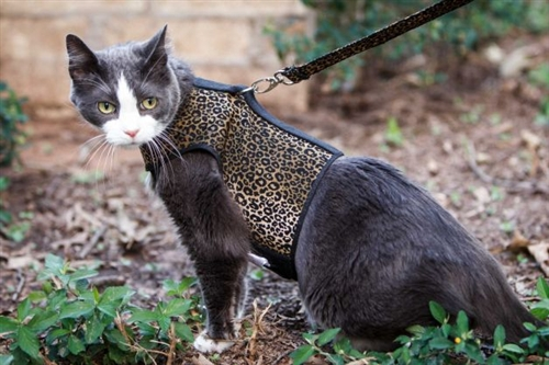 kitty-holster-cat-harness-3 (1)