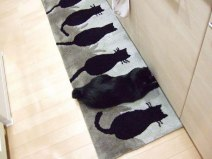 ninja-cats-2-16__605