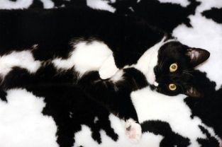 ninja-cats-2-4__605