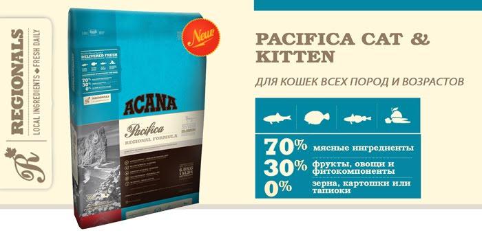 PACIFICA-CAT-&-KITTEN