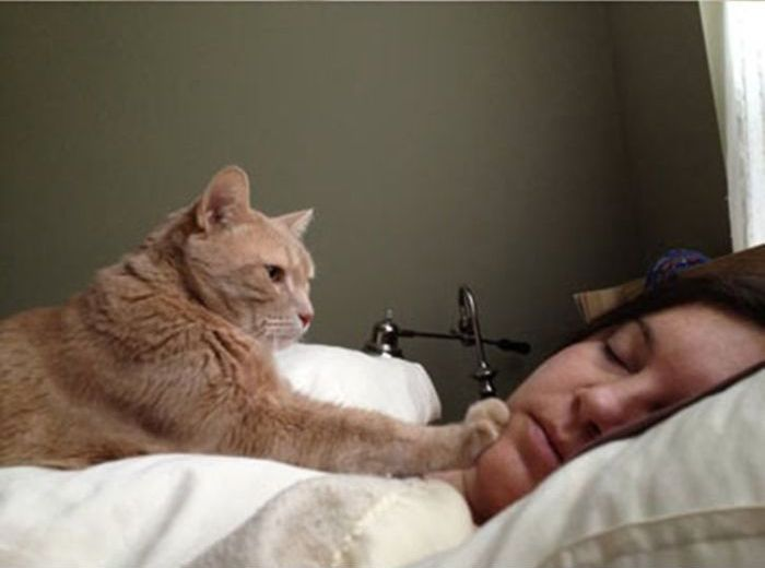 how_cat_people_wake_up_04