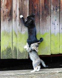 Эти весёлые, дружные котята нашлись в блоге у Лоры - любительницы природы и кофе, исследовательницы по своей натуре.Она говорит, что видит мир через объектив фотокамеры. И это действительно так!