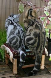Знакомьтесь, это Чарли и Люси - любимые кошки Ирэн Верли (Irene Wehrli) из Швейцарии. Она живёт в небольшой деревушке, много фотографирует и обожает своих британских кошек восхитительного, потрясающего мраморного окраса.