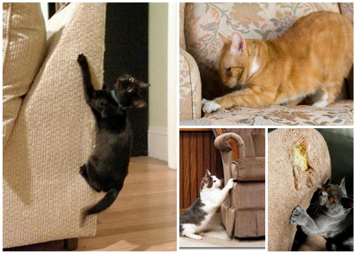Как сделать чтоб кошка не просила кота