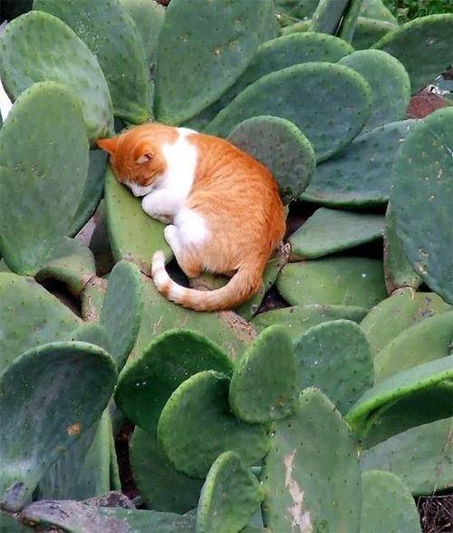 Мы часто думаем, что кошки любят комфорт и уют, выбирают для сна места помягче и поуютнее. Неужели этому спящему коту не нашлось места получше?