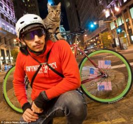 кошки на велосипеде
