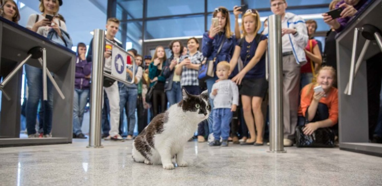 Новосибирск-кот-Ништяк