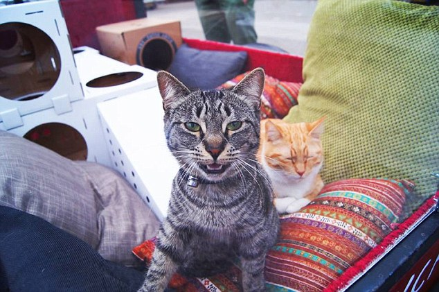 путешествие с кошками 6