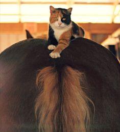 В альбоме фотографа из США Дженифер МакНейл, судя по её работам, любительнице деревенской жизни, лошадей и кошек, обнаружился этот прекрасный снимок.