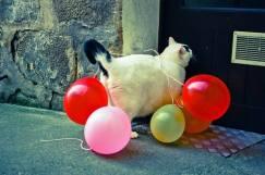 """Ещё одно фото из коллекции """"Кошки похожи на людей"""". Признайтесь, ведь вам приходилось хоть раз в жизни возвращаться домой после хорошей вечеринки?"""