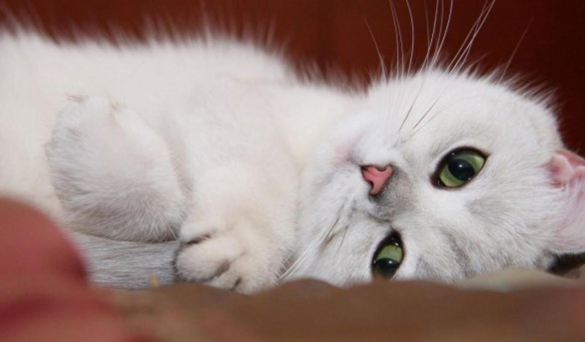 7 признаков счастливой кошки