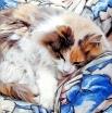 Эта чудесная кошка нашлась в портфолио художника из Саннивейла (штат Калифорния), который работает под ником sunnyvaledave. Он фотографирует и художественно обрабатывает свои работы, применяя самые различные компьютерные технологии. В результате мир на его картинах удивляет и завораживает, при этом художник говорит, что сам он никогда не может предвидеть результат работы заранее, и всё как всегда зависит от случая.  Все работы автора https://www.flickr.com/photos/davelsworld/albums/with/72157615260550449