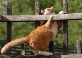 Радуем вас вот такой замечательной фотографией кота Maффи. Этот знаменитый кот давно прославился в интернете благодаря множеству других великолепных фото, сделанных его владельцем Матсом Хамнэсом (Mats Hamnäs, Хельсенбург, Швеция), но эта фотография мало кому известна. Все фото автора https://www.flickr.com/photos/matsomuffi/with/20581892371