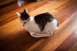Кошки любят новые вещи, вот и Алфи осваивает новую насадку на паровую швабру. Его владелец Сэм Коллинз из Брисбена (Австралия) очень любит своего кота и много его фотографирует.