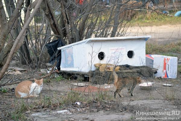 В Кинешме построили во дворе домики для бездомных кошек 2