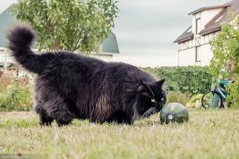 Пройти мимо фотографий этой красавицы было совершенно невозможно. Чёрные кошки вообще непохожи на других и обладают какой-то особой харизмой, притягивающей к себе как магнитом. Автор фото Polina Dov.