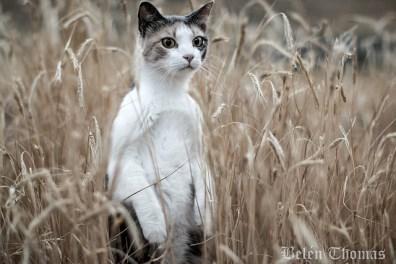 """Эту фотографию Белен Томас из Орегона назвала """"Кошка- суриката"""". И правда, выглядывая из густых зарослей, киска очень похожа на это маленькое млекопитающее. Так же как и сурикаты, кошки частенько стоят столбиком и осматривают окружающее пространство, но не из опасения, а из любопытства, иногда надолго замирая, если их что-то сильно заинтересовало."""