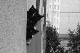 """Присматривайте за своими кошками! Всегда помните старую английскую пословицу """"Любопытство сгубило кошку! Правда не все знают, что у неё есть и продолжение «…но удовлетворив его она воскресла!» (Curiosity killed the cat, but satisfaction brought it back). Действительно, любопытство усато-хвостатой братии часто превалирует над осторожностью, и наши питомцы часто попадают в сложные ситуации. Несмотря на то, что благодаря своей ловкости и проворности они обычно благополучно из них выбираются, присматривать за ними не помешает. ( автор фото неизвестен)"""