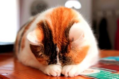 """""""Прячьтесь, я считаю до 100!"""" так назвала этот снимок фотограф-любитель из Бордо Елена Ридо. Она снимает просто для удовольствия и отдаёт предпочтение картинам природы, флоры и фауны. Кошки у неё получаются прекрасно!"""
